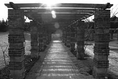 La roseraie (Antibla) Tags: la puteaux roseraie 450d