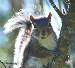 Nikon D80 DSC 587 (Lorcan Keating) Tags: eyecatchers naturespotofgold
