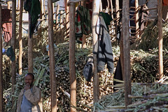 What? Dentists say sugar is bad for your teeth? (10b travelling / Carsten ten Brink) Tags: eastafrica hornofafrica bahir dar bahirdar market shopping sugar cane bahardar bahar ethiopia ethiopie aethiopien abyssinia ostafrika ctb cmtb tenbrink 10b carsten ten brink afrika afrique est africa peopleset photoused schweizerbauer zuckerrohr
