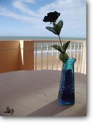 La Rosa y El Mar (Alberto Jiménez Rey) Tags: blue sea sky beach azul mar almudena rosa cybershot playa victoria alberto cielo manuel cadiz rey lucia martinez negra celeste tapia jimenez dsct200