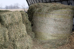 Different kinds of hay
