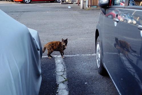 Today's Cat@20090318