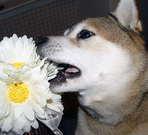 Please don't eat the daisies!