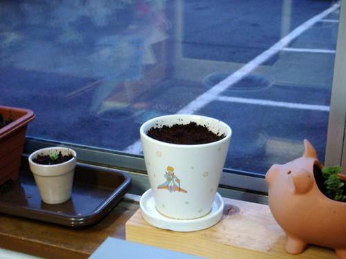 九重園でもらったお茶の種