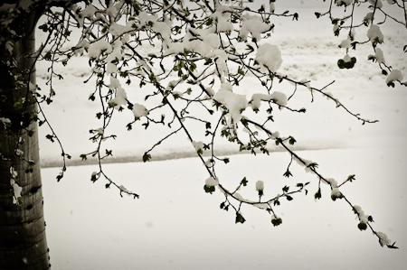 Snow_Storm-4