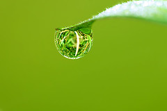 HAPPY EARTH DAY  (tropicaLiving - Jessy Eykendorp) Tags: macro reflection green nature grass canon indonesia happy eos 22 is day bokeh earth jo drop tip dew refraction planet april wikipedia environment forever westjava 70300mm 2009 ef bogor blankenburg hed 50d thinkgreen hbw tropicaliving ciapus