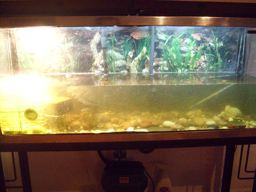 how do i keep my turtle tank water to be clean and non cloudy?