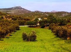 ...son los campos de mi tierra... para Willezq # EXPLORE (**i) (Brian Wayfarer) Tags: espaa andaluca provinciadecrdoba egabro subbticacordobesa explore2009
