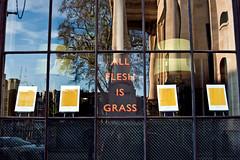 all flesh is grass (johanna) Tags: window glass grass flesh letters spitalfields gillsans