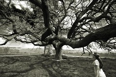Il gigante e la bambina (fabio c. favaloro) Tags: bw italy tree oak bn 2009 tuscan d300 quercia secolare nikond300 fabiocfavaloro quercionedellechecche