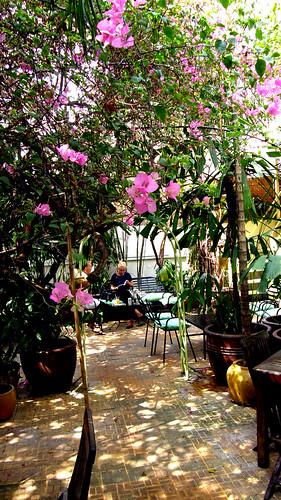 051.Boddhi Tree盛開的花
