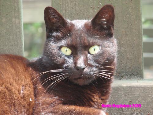 Cat20090522-Black