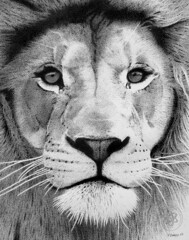 Lion 02 (pbradyart) Tags: portrait bw art pen ink sketch artwork drawing lion pointillism artcafe catdrawing animaldrawing mywinners superaplus aplusphoto lionportrait diamondclassphotographer flickrdiamond theunforgettablepictures naturewatcher artlegacy goldstaraward flickrestrellas liondrawing quarzoespecial 100commentgroup flickrbigcats bigcatdrawing wildanimaldrawing