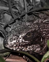 Jurassic Park (simon.gonzalez) Tags: animals reptile animales tectures