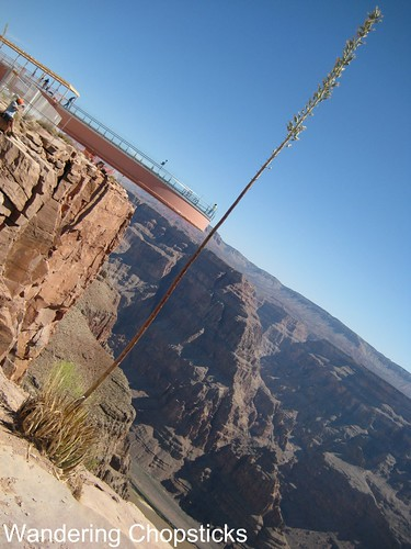 Grand Canyon West Rim - Hualapai Nation - Peach Springs - Arizona 20