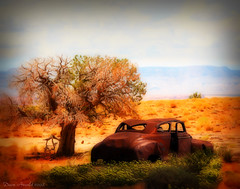 The Last Oasis (Dave Arnold Photo) Tags: pictures arizona usa chevrolet abandoned photoshop canon us photo desert image photos arnold digitalart picture az pic images chevy photograph getty blackrose cs3 davearnold flickrsilver greatimage flickrgold canonequipment peaceaward photoshopcs3 flickrbronze dragondaggeraward artofimages platinumpeaceaward davearnoldphoto davearnoldphotocom arnoldd