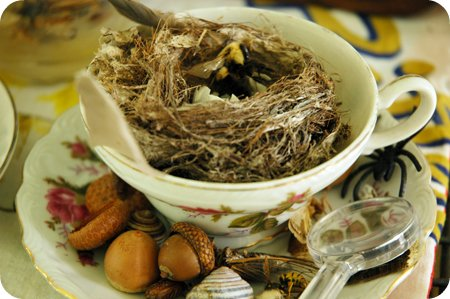 bird nest and dead bugs for inspection