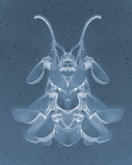 insect 007 negative (Mammaoca2008) Tags: insect mirror cc negative creativecommons falseinsect
