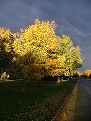 After The Storm (pam's pics-) Tags: park city autumn trees sky storm tree fall colors rain colorado afternoon fallcolors denver finepix co fujifilm pammorris pamspics denverpam fujifjilmfinepixs5000