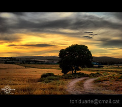 Camino. (Toni Duarte) Tags: sunset camp espaa naturaleza tree nature field arbol atardecer spain nikon europa europe camino path straw aragon campo d200 crepusculo arbre paja teruel palla mora espanya cam crepuscle capvespre terol arag nikond200 rubielos naturalesa colourartaward toniduarte saariysqualitypictures yourwonderland gettyimagesiberiaq2
