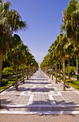 Almera capital (alekspression) Tags: palms spain cabo palmeras gata almeria cabodegata