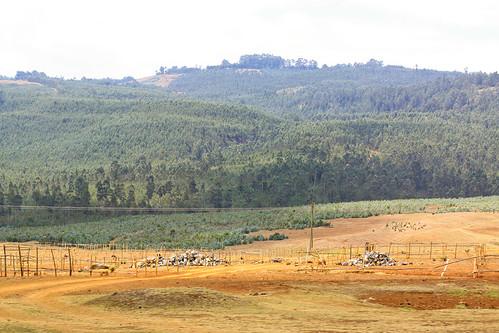 Ethiopia -45