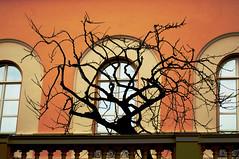 Prince's Palace Monaco (Chimera Dave) Tags: tree window silhouette arch balcony monaco princespalace