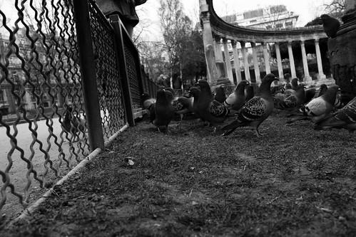 Pigeon manger pigeon manger manger