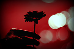 (FatoOoma Qatar ~) Tags: life red sea black flower love silhouette rose canon dark photo leaf focus flickr alone hand sad darkness natural image you bokeh picture hate fav 2009 fatma doha qatar mecro naturalism flickcom bokah naturalists fatoooma