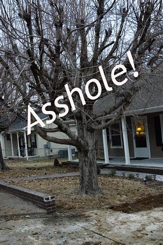 asshole-tree