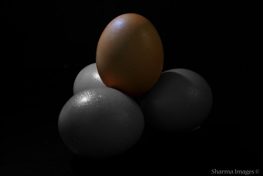 Day 046 | February 15, 2009 | Eggs