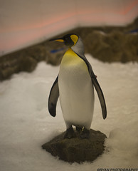 Chillin,.. (D3 Photography) Tags: city aquarium nikon sigma australia melbourne d3 50mmf14