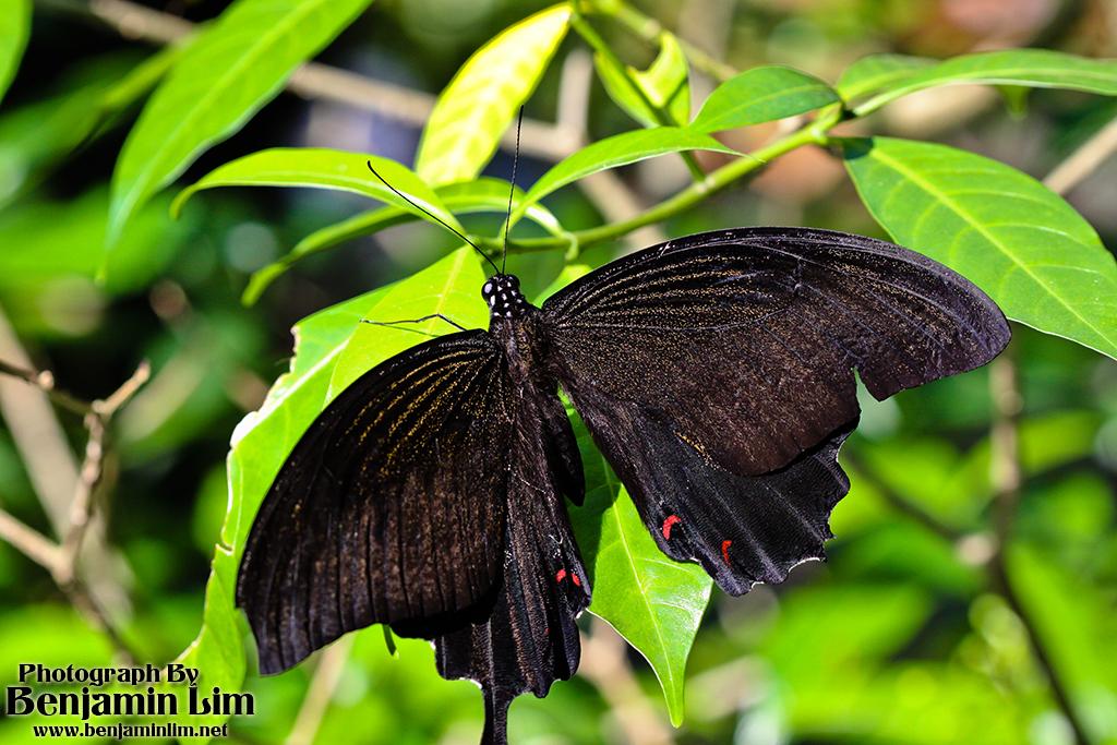 butterflyfarm01_04