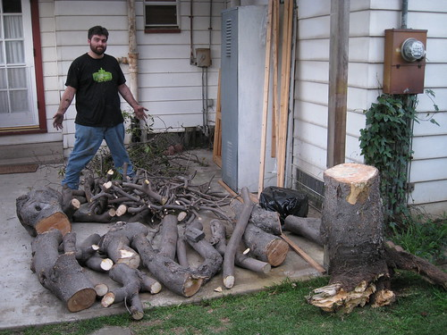 largest haul yet of mystery tree logs and branches