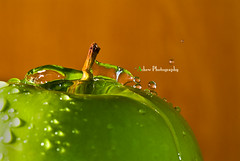 DSC01800 (achew *Bokehmon*) Tags: macro green apple water sony droplet splash alpha tamron 90mm f28 a300 sp90 abigfave aplusphoto platinumheartaward