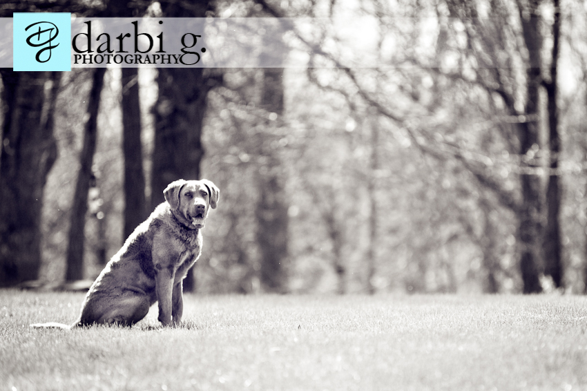 Darbi G photography-dog puppy photographer-_MG_9285-Edit