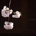 遅咲きの八重桜