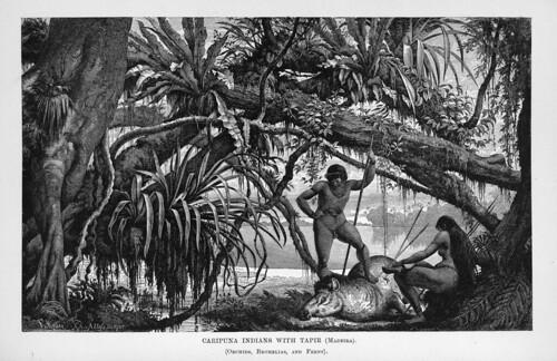 004-Los Ríos Amazonas y Madeira 1875- Indios Caripuna con un Tapir en el Madeira
