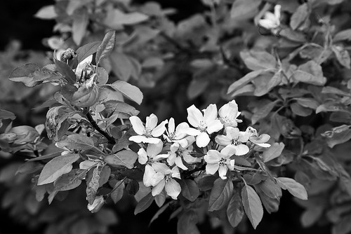 Black & White flowers