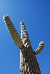 (Ryan Tolene) Tags: arizona cactus tucson saguaronationalpark