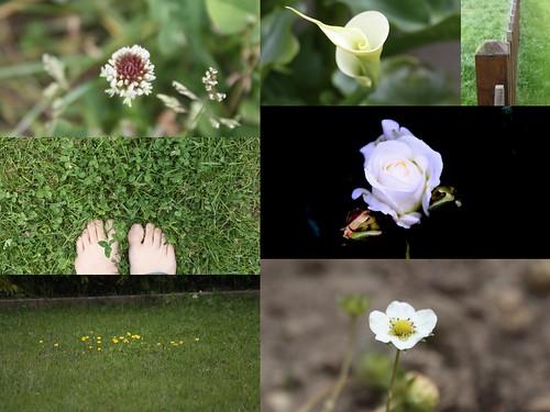 do xardín
