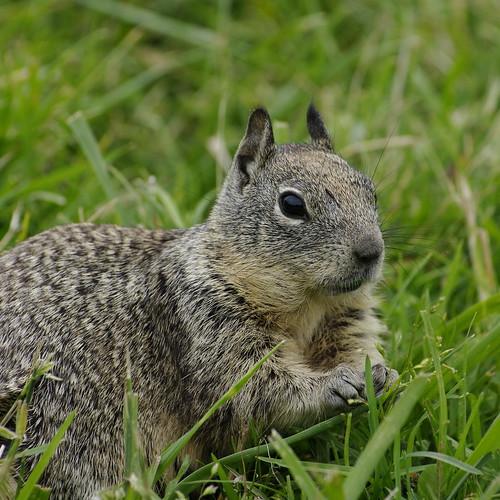 Pentax DA* 50-135mm f/2.8 On Squirrels Test Shots