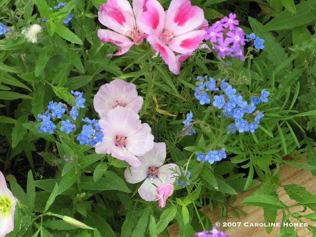 2007wildflowers