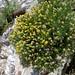 20070518: Gibraltar: flowers