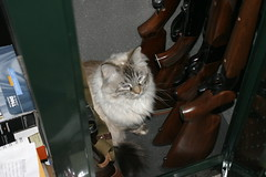 cat sera guns safe