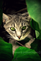 (Rhea Quitasol | Photography) Tags: green leaves animal cat nikon outdoor wildlife 28 nikkor rhea quitasol d80 80mm200mm rheaqphotography