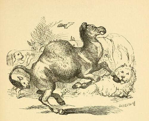 Simius et Camelus, Saltantes