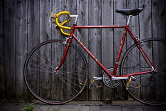 Gazelle Champion (bilderrausch/en) Tags: bike continental retro 70s gazelle racer rennrad racingbicycle classicroadbike 3ttt 70erjahre shimanoduraace gazellechampion conticompetition sony1680cz