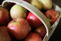 Simply Fresh Produce: Gala Apples (Fred_T) Tags: red green apple fruit canon rebel virginia basket charlottesville plantae gala rosales malus rosaceae maloideae magnoliophyta magnoliopsida galaapple malusdomestica xti simplyfreshproduce maleae