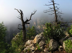 Mysterious (zoniedude1) Tags: morning arizona cliff mist southwest nature wet fog forest outdoors canyon explore edge mysterious wilderness exploration discovery soggy precipice deadtrees coconinonationalforest naturesfinest coth canonpowershota720is zoniedude1 westclearcreekwilderness mmmilikeit drippygreenplants